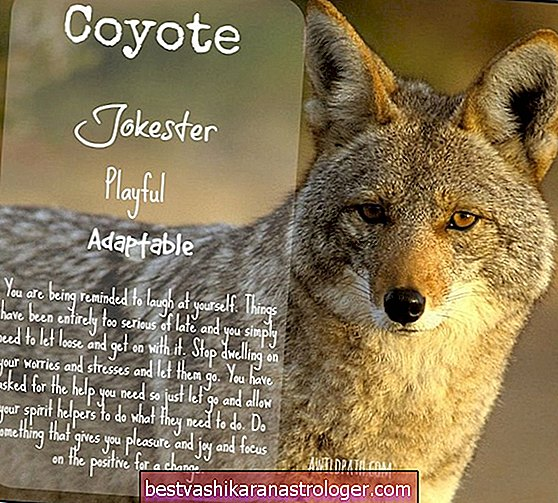 The Coyote Spirit Animal