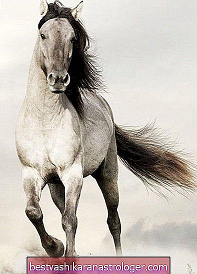 Das Pferd Geist Tier